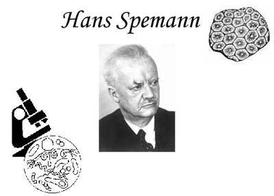 Spemann
